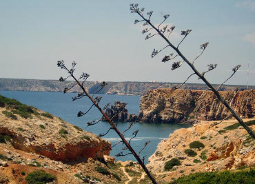 Transfers in Algarve with VibelTaxis